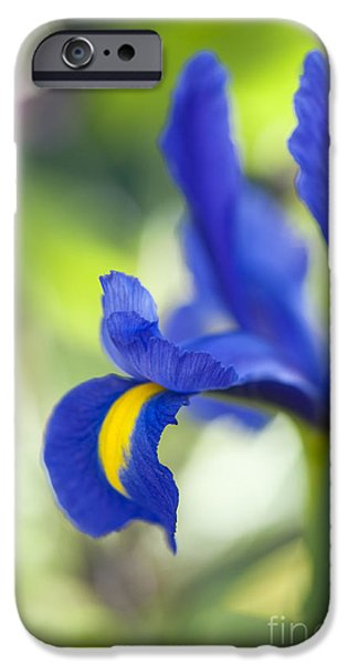Anther iPhone Cases - Iris hollandica Blue Magic iPhone Case by Tim Gainey