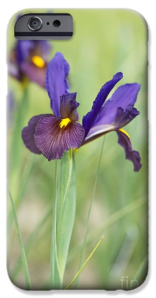 The Tiger iPhone Cases - Iris Hollandica Eye of the Tiger iPhone Case by Tim Gainey