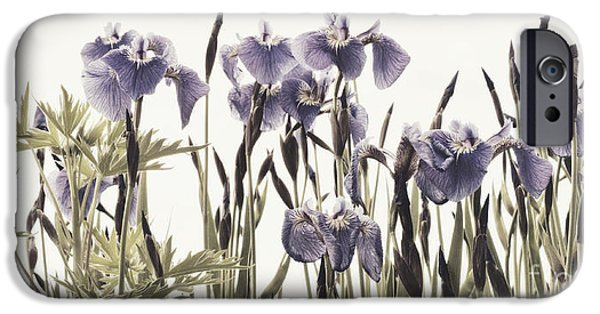 Iris iPhone Cases - Iris In The Park iPhone Case by Priska Wettstein