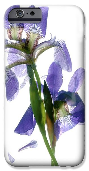 Purple And Green iPhone Cases - Iris iPhone Case by Julia McLemore