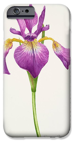 Botanical Paintings iPhone Cases - Iris laevitigata iPhone Case by Sally Crosthwaite