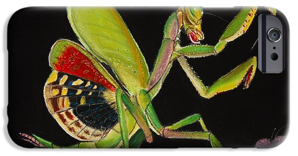 Butterfly Prey iPhone Cases - Iris oratoria iPhone Case by Mik Smith