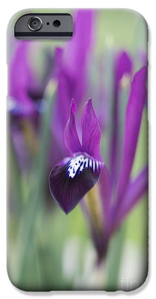 Anther iPhone Cases - Iris Purple Gem iPhone Case by Tim Gainey