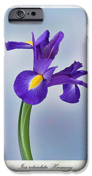 Stamen iPhone Cases - Iris reticulata iPhone Case by John Edwards