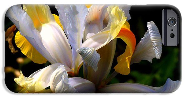 Plant iPhone Cases - Iris iPhone Case by Rona Black
