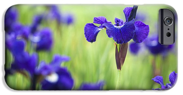 Pope iPhone Cases - Iris sibirica Shirley Pope iPhone Case by Tim Gainey