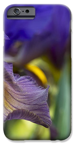 Iris x hollandica 'Eye of the Tiger' iPhone Case by Tim Gainey