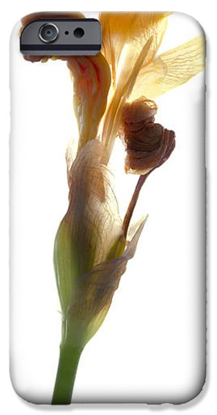 Botanical iPhone Cases - Iris Yellow iPhone Case by Julia McLemore