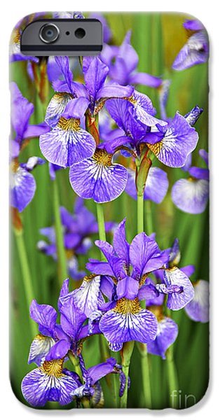 Violet Photographs iPhone Cases - Irises iPhone Case by Elena Elisseeva