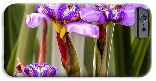 Garden Photographs iPhone Cases - Irises iPhone Case by Zina Stromberg