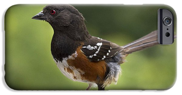 Sparrow iPhone Cases - Is Cecil around iPhone Case by Jean Noren