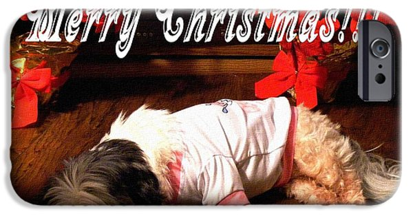 Lazy Red Dog iPhone Cases - Is it Christmas yet iPhone Case by Barbara Griffin