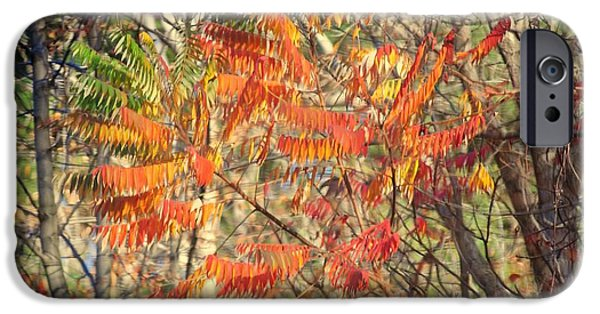 Willow Lake iPhone Cases - Is it Live or is it Memorex iPhone Case by Frozen in Time Fine Art Photography