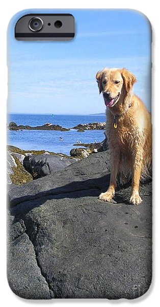 Maine iPhone Cases - Island Dog iPhone Case by Elizabeth Dow