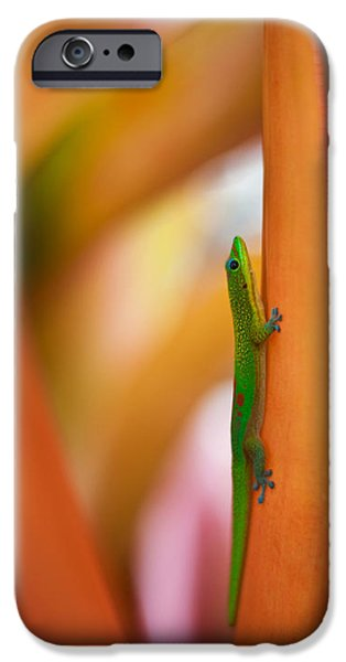 Big Island iPhone Cases - Island Friend iPhone Case by Mike Reid