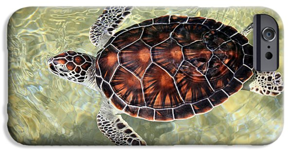 Manatee iPhone Cases - Island Turtle iPhone Case by Jimmy Nelson