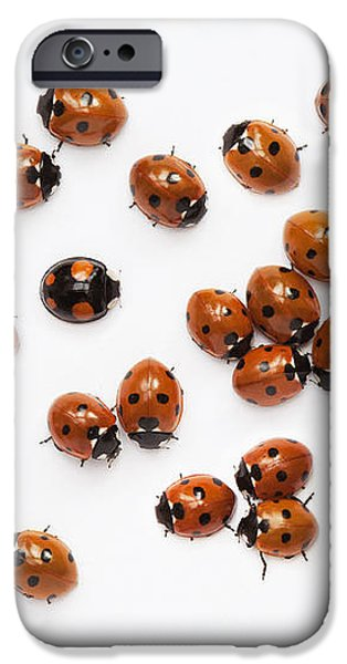 Its a Bug Thing iPhone Case by Tim Gainey