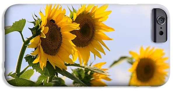 Buttonwood Farm iPhone Cases - Its a Sunflowery Day iPhone Case by Dorothy Drobney