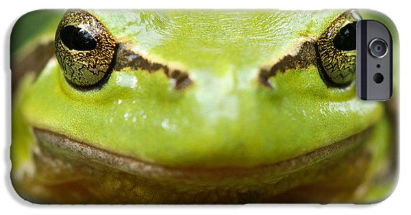 Amphibian iPhone Cases - Its Not Easy Being Green _ Tree Frog Portrait iPhone Case by Roeselien Raimond