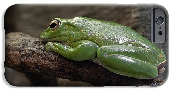 Flying Frog iPhone Cases - Its Not Easy Being Green iPhone Case by Barbara McMahon
