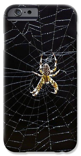Itsy Bitsy Spider My Ass 2 iPhone Case by Steve Harrington