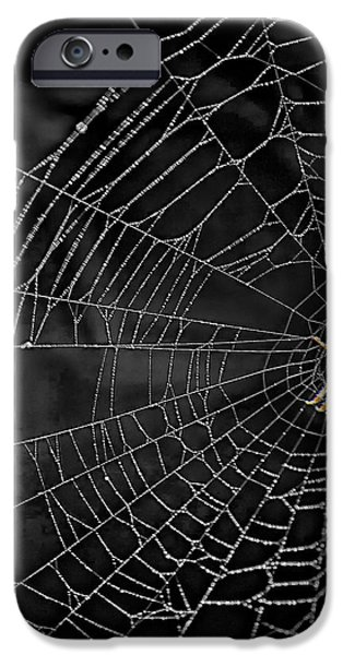Itsy Bitsy Spider My Ass 3 iPhone Case by Steve Harrington