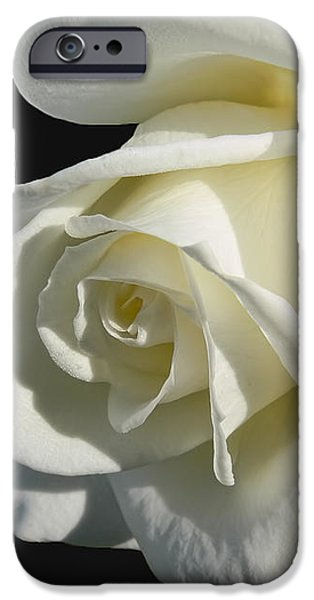Ivory Rose Flower on Black iPhone Case by Jennie Marie Schell