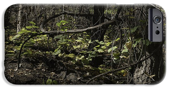 Oak Creek iPhone Cases - Ivy Along The Path iPhone Case by Lorraine Harrington