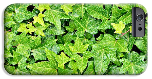 Rainy Day iPhone Cases - Ivy leaves with rain drops iPhone Case by Skyfish Images
