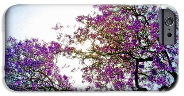 Jacaranda Tree iPhone Cases - Jacaranda Glory iPhone Case by Gwyn Newcombe
