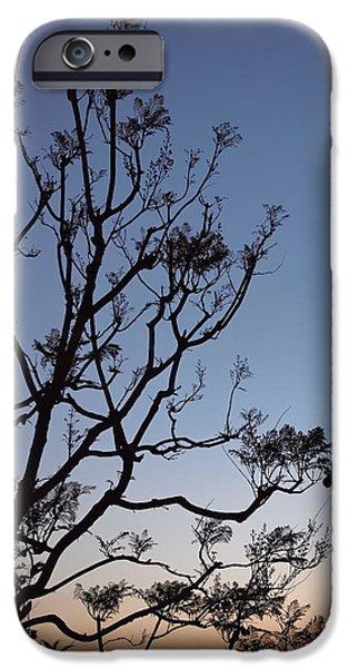California Photographs iPhone Cases - Jacaranda Sunset iPhone Case by Rona Black