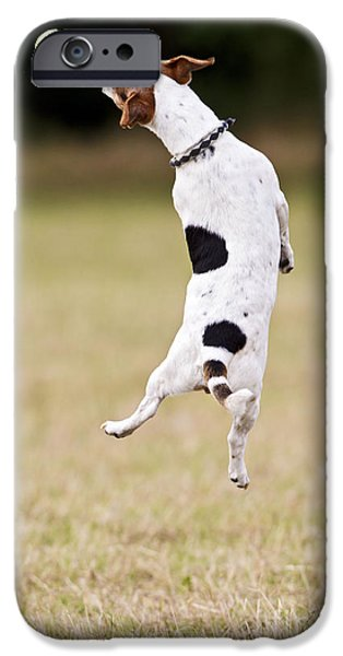 Dog With Ball iPhone Cases - Jack Russell Jumping For Ball iPhone Case by Brian Bevan