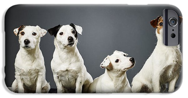 Four Animal Faces iPhone Cases - Jack Russell terrier family portrait iPhone Case by Jari Hindstroem