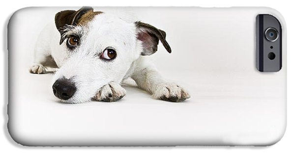 Jack Russell iPhone Cases - Jack Russell Terrier- Fine Art Photography by Holly Martin iPhone Case by Holly Martin