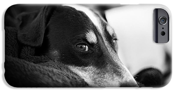 Jack Russell iPhone Cases - Jack Russell Terrier Portrait in Black and White iPhone Case by Natalie Kinnear