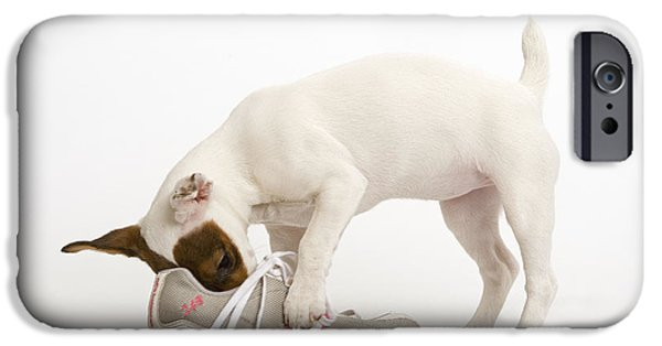 Sneaker iPhone Cases - Jack Russell With Sneaker iPhone Case by Jean-Michel Labat