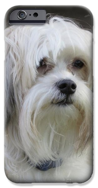 Recently Sold -  - Puppy Digital iPhone Cases - Jacks Bad Hair Day iPhone Case by Ella Kaye Dickey