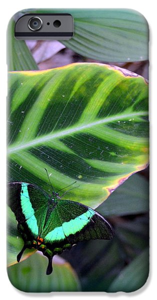 Stripes Jewelry iPhone Cases - Jade Butterfly with vignette iPhone Case by Carla Parris
