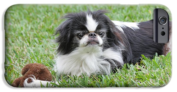 Japanese Chin Puppy iPhone Cases - Japanese Chin - 1 iPhone Case by Rudy Umans