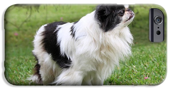Japanese Chin Puppy iPhone Cases - Japanese Chin - 2 iPhone Case by Rudy Umans