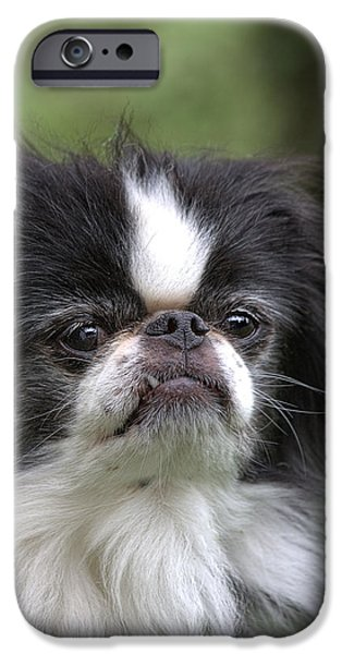 Japanese Chin Puppy iPhone Cases - Japanese Chin - 3 iPhone Case by Rudy Umans