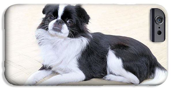 Japanese Chin Puppy iPhone Cases - Japanese Chin - 5 iPhone Case by Rudy Umans