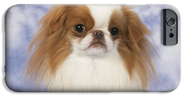 Chin Up Photographs iPhone Cases - Japanese Chin Dog iPhone Case by John Daniels