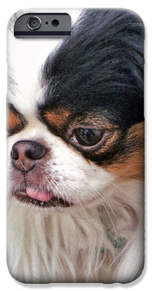 Japanese Chin Puppy iPhone Cases - Japanese Chin Dog Portrait iPhone Case by Jim Fitzpatrick