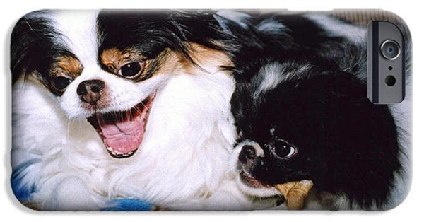 Japanese Chin Puppy iPhone Cases - Japanese Chin Dogs Hanging Out and Telling Stories iPhone Case by Jim Fitzpatrick