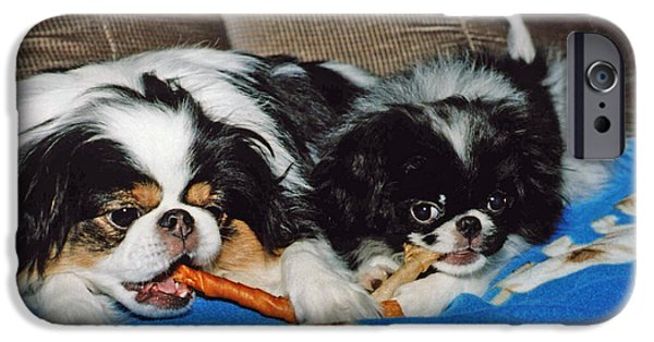 Japanese Chin Puppy iPhone Cases - Japanese Chin Dogs Hanging Out iPhone Case by Jim Fitzpatrick