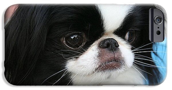 Dogs iPhone Cases - Japanese Chin  iPhone Case by Marvin Blaine