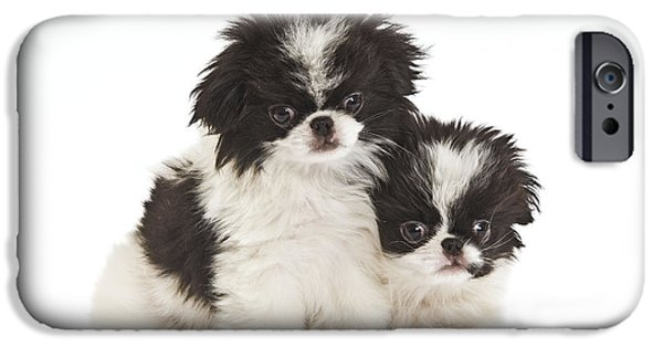 Japanese Chin Puppy iPhone Cases - Japanese Chin Puppies iPhone Case by Jean-Michel Labat