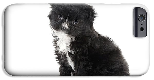 Japanese Chin Puppy iPhone Cases - Japanese Chin X Papillon iPhone Case by John Daniels