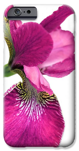 Dark Pink iPhone Cases - Japanese Iris Hot Pink White  iPhone Case by Jennie Marie Schell